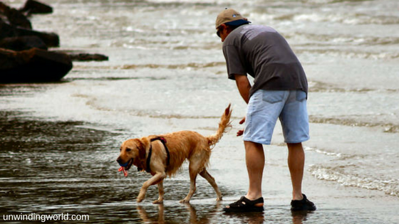 Are dogs good for you- take it easy with your dog